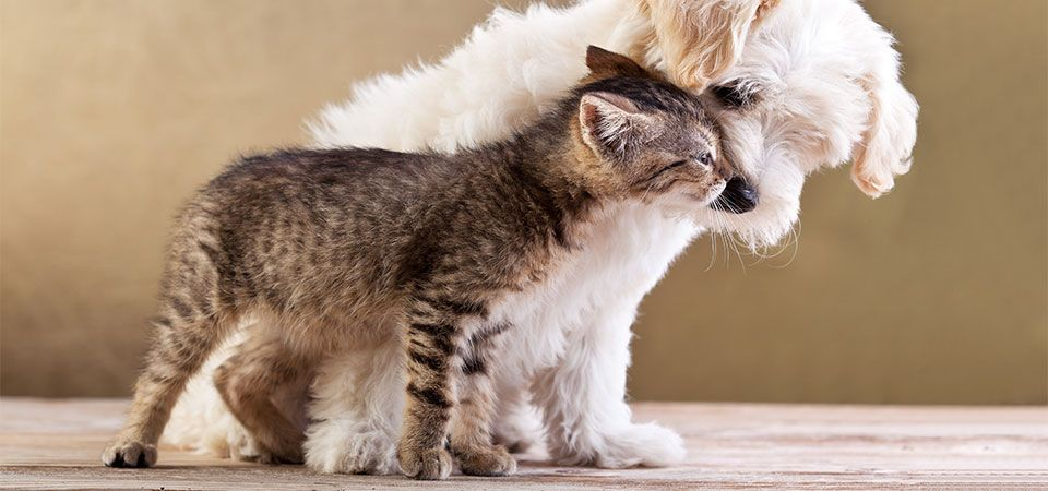 cat kissing dog