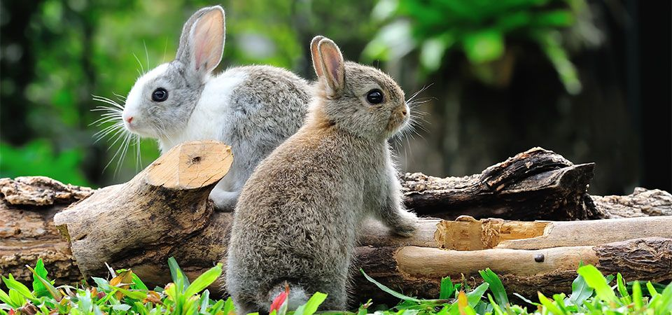 cute rabbits outdoor